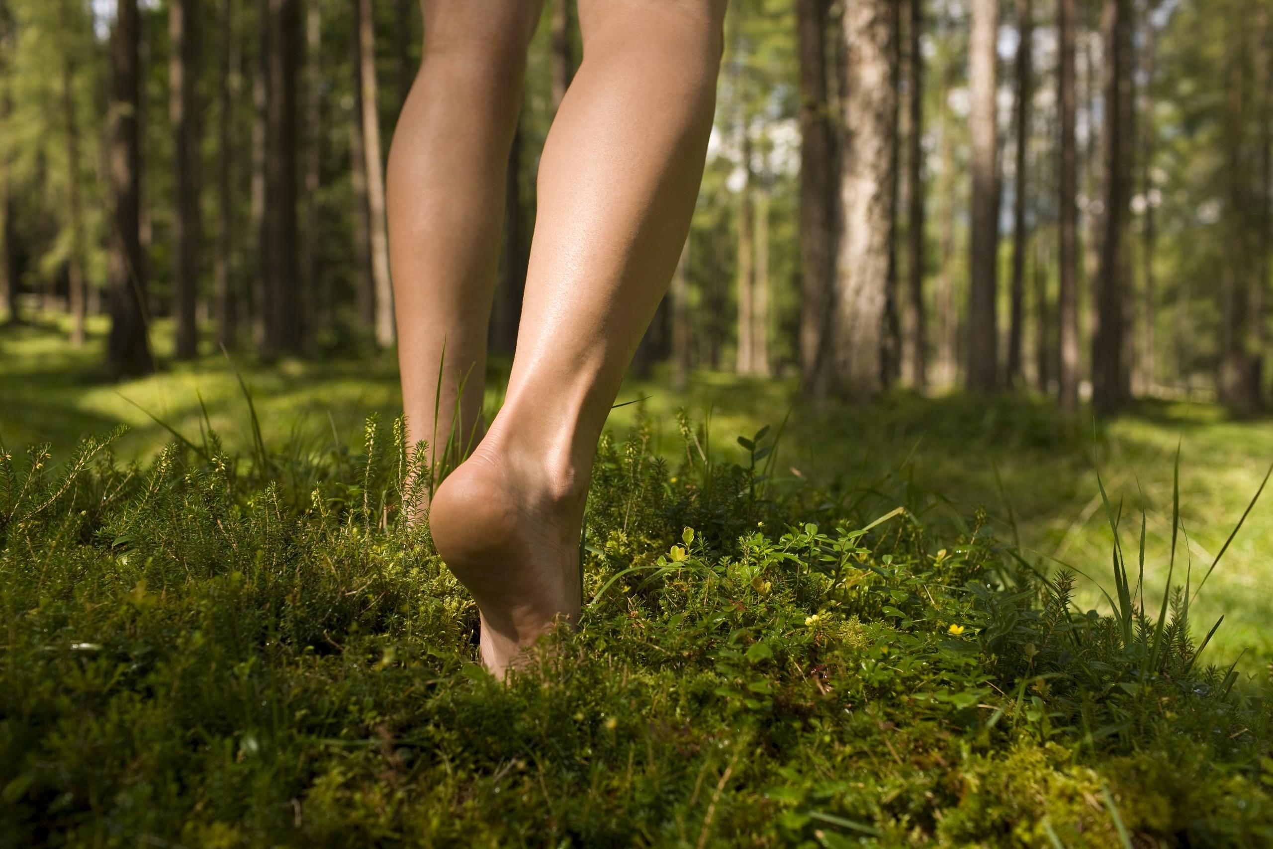 Wald & Beine